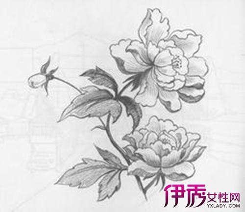 花画图片大全素描展示 感受黑白世界的魅力
