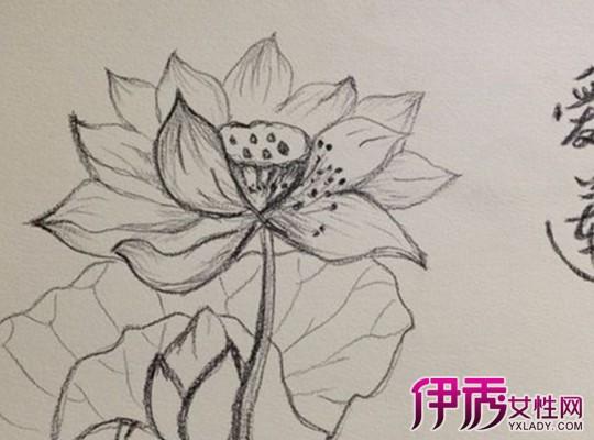 花素描简单铅笔画分享_花素描简单铅笔画图片下载