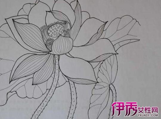 手绘荷花图片铅笔画_荷花彩铅绘画步骤过程