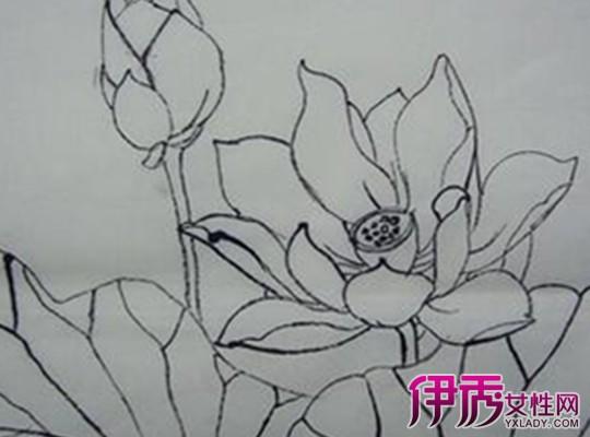 【图】手绘荷花图片铅笔画大全 详解手绘荷花教程