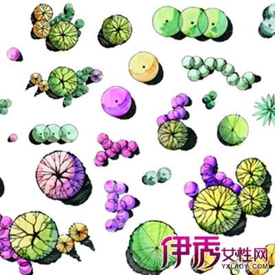 【图】手绘植物平面图例展示