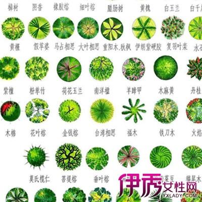 【手绘植物平面图例】【图】手绘植物平面图例展示