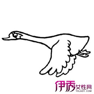 飞天鹅简笔画图片大全