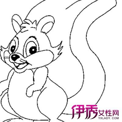 【松鼠的简笔画】【图】松鼠的简笔画图片欣赏