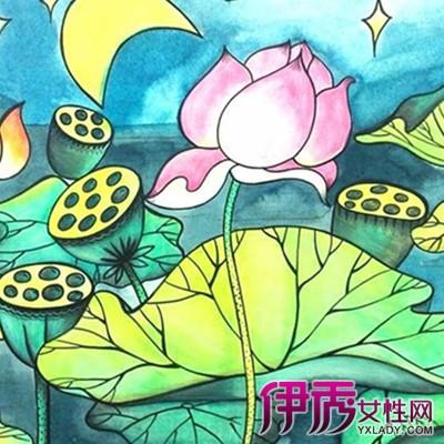海洋植物简笔画彩色