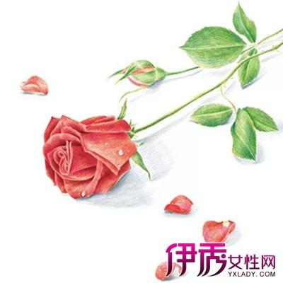 彩铅手绘玫瑰花怎么调色细密的覆盖住并画出浓淡过度的感觉.