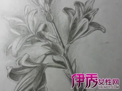 【图】百合花画法介绍 教你画最好看的百合花