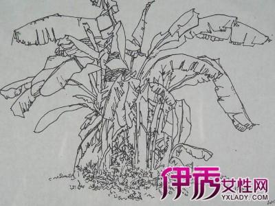欧式皇家风格植物素描画