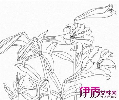 【图】百合花的画法大盘点