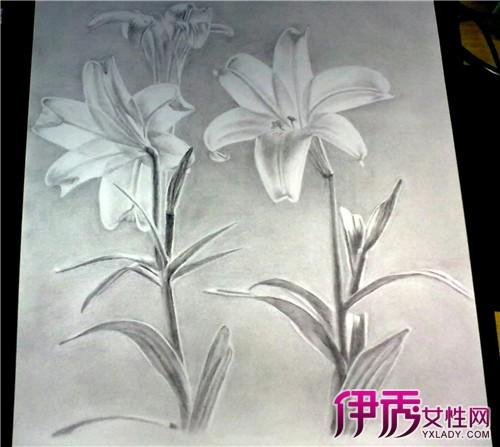 【百合花的画法】【图】百合花的画法大盘点