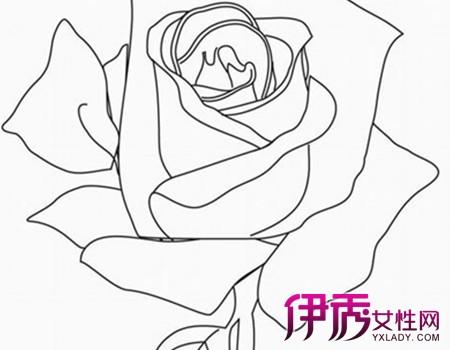 【图】画玫瑰花的简笔画图片-盛开玫瑰花简笔画图片图片