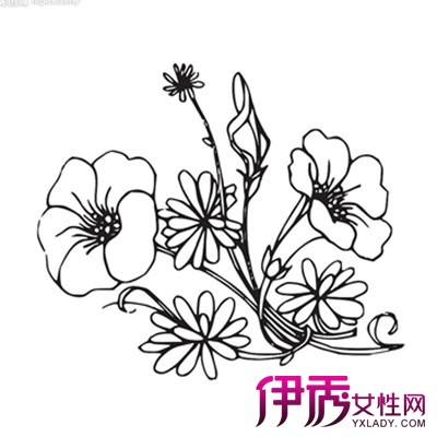 【花卉简笔画图片大全】【图】美丽的花卉简笔画图片