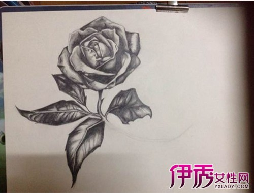 素描玫瑰花的画法步骤
