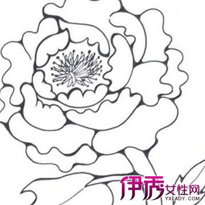【手绘牡丹花简笔画】【图】欣赏手绘牡丹花简笔画