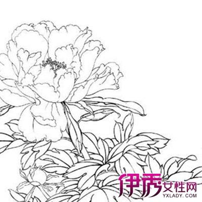 【图】欣赏手绘牡丹花简笔画 几个手绘的技巧方法推荐