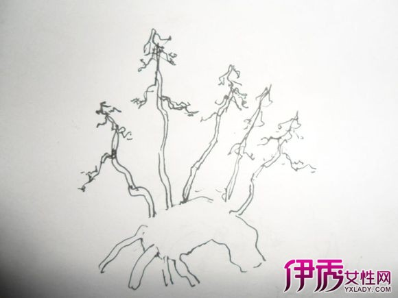 【图】银杏树简笔画图片欣赏 5大方法教你如何学会简笔画
