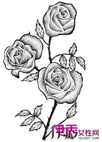 玫瑰花图画手绘图素描分享展示