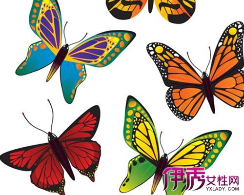 【图】手绘蝴蝶素材图片欣赏 几个手绘的技巧方法推荐