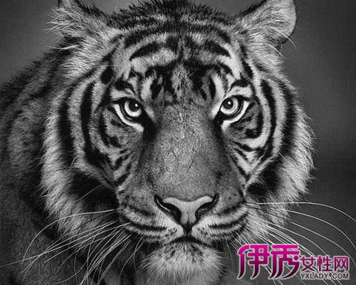 【动物素描画】【图】动物素描画欣赏
