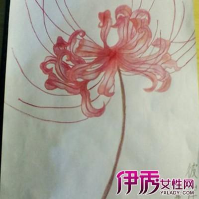 彼岸花手绘铅笔画图片欣赏