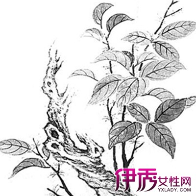 【图】手绘桂花树图片展示 教你如何快速学会手绘基础知识