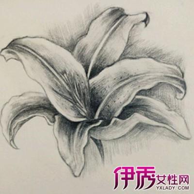 百合花素描图片 素描花的静物步骤讲解图片