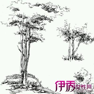 【图】欣赏植物手绘线稿图片 几个手绘技巧方法推荐