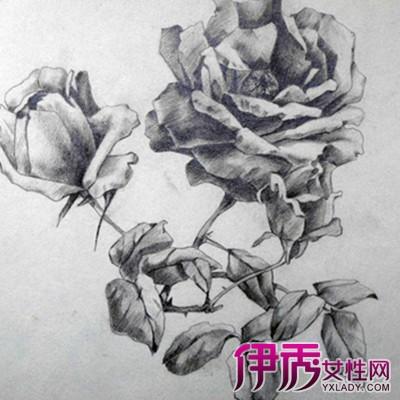 【图】花的素描图片大全欣赏-素描手图片欣赏 手的画法图片