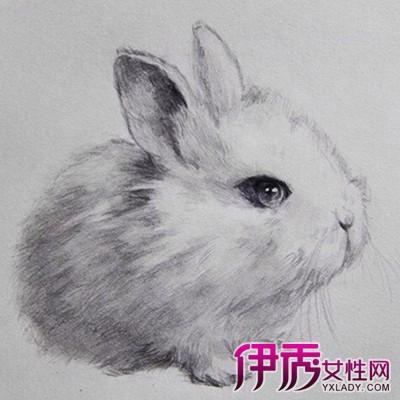 【图】素描兔子图片欣赏 为你介绍素描的2个类型