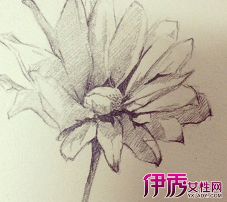 张花朵的简笔画图片