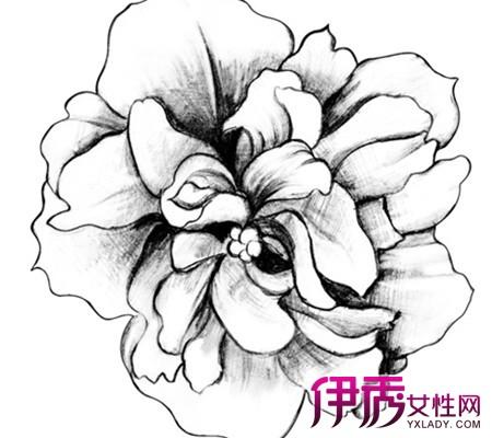 简单的素描画花朵【相关词_ 铅笔画素描花朵花卉】