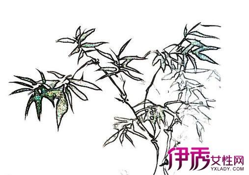 【竹子素描图片】【图】竹子素描图片展示