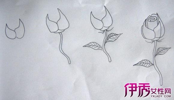 【图】如何简笔画玫瑰花 8个简单小步骤画大作