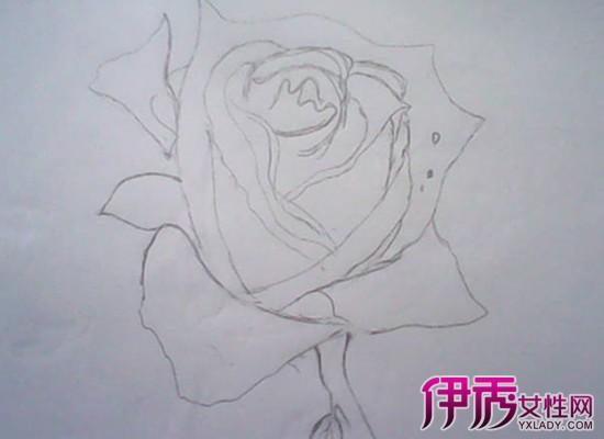 如何简笔画玫瑰花 8个简单小步骤画大作