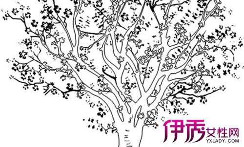 【樱花树简笔画】【图】樱花树简笔画欣赏