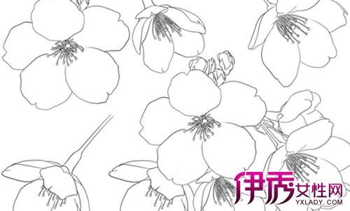 樱花树简笔画欣赏 简笔画绘画要点介绍图片