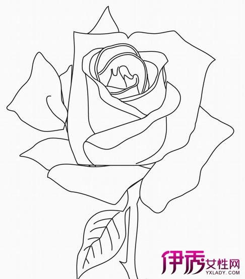 【玫瑰花画法】【图】传授玫瑰花画法