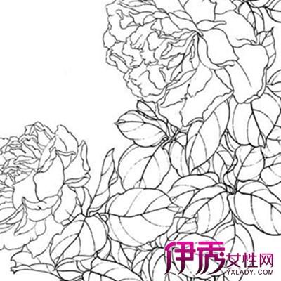 【图】工笔画线描花卉画谱图片展示 注意阴粗阳细阴浓阳淡原则