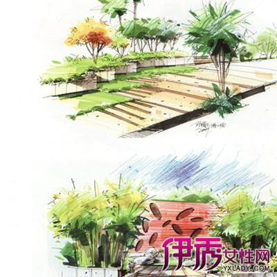 【图】植物室外设计手绘图欣赏 全面了解当前的热门行业