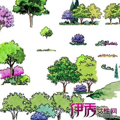【室外设计手绘 植物】【图】植物室外设计手绘图