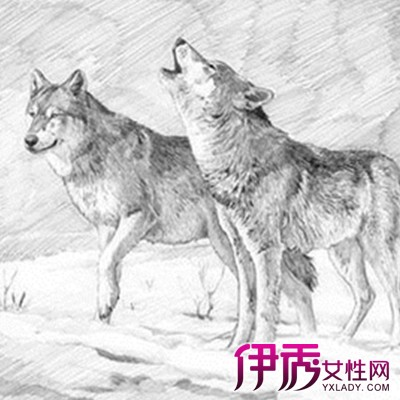 狼素描图片大全 素描的工具有哪些