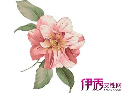 【图】水彩手绘小清新植物图片大全 手绘的六个步骤分享