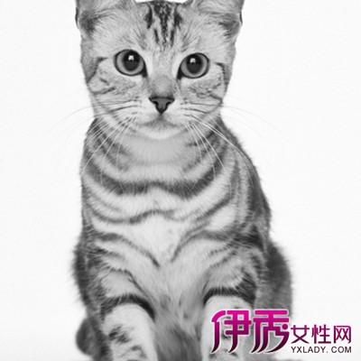信息中心 教你画20种猫的素描结构步骤图   小猫素描怎么画小猫素描的
