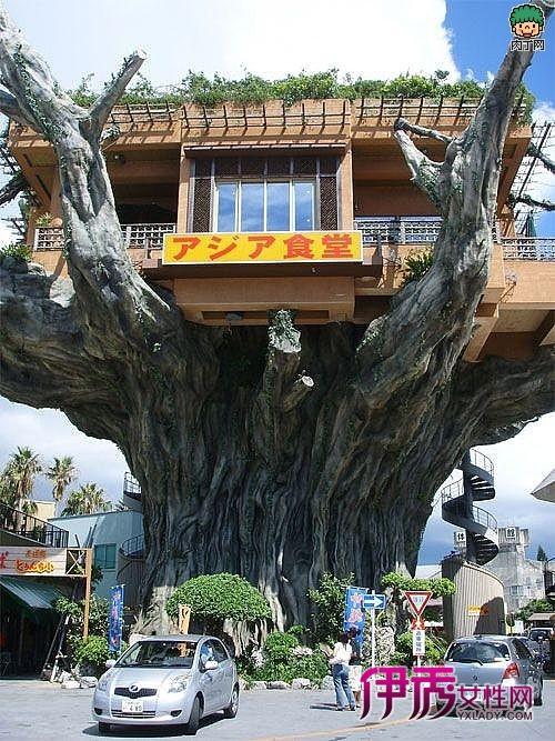 建在树上的房子分享展示图片