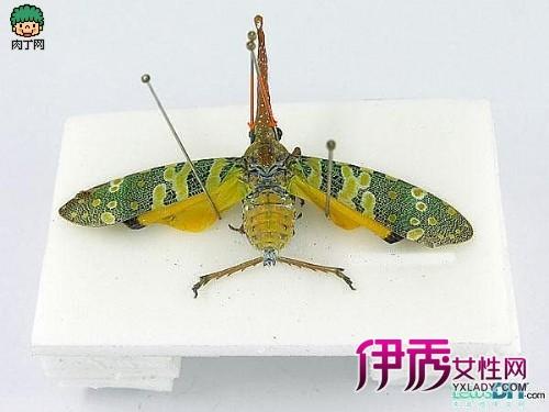 新浪博客   分类: 大千网闻   (2011-07-26 )   昆虫树脂标本如何