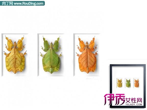 用各种甲壳虫制作的创意装饰画欣赏