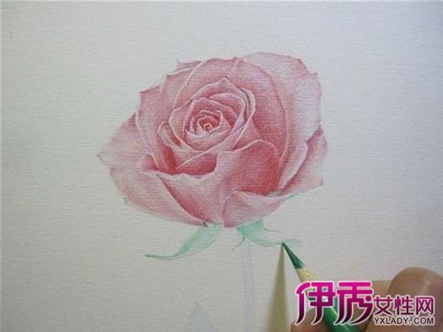 玫瑰花手绘用素描的画法怎么画 11个步骤画出逼真玫瑰图片