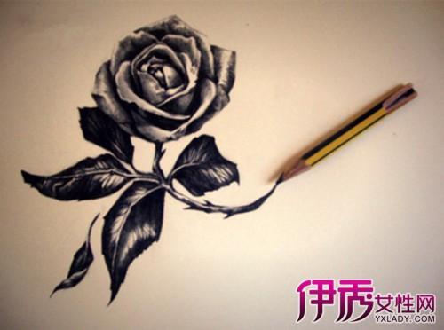 【玫瑰花手绘 素描】【图】玫瑰花手绘用素描的画法