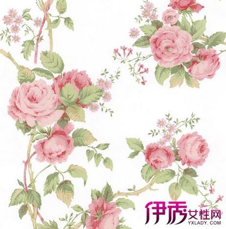 【图】蔷薇花手绘图片汇总 蔷薇花的药用价值及花语介绍