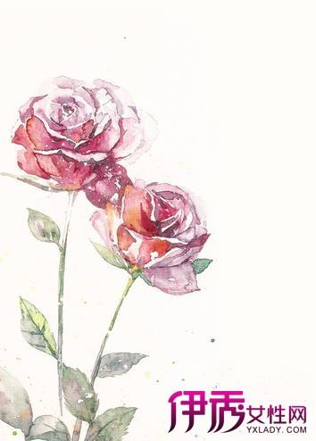 【蔷薇花手绘】【图】蔷薇花手绘图片汇总